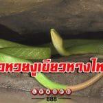 ขอหวยงูเขียวหางไหม้ เริงระบำในน้ำ
